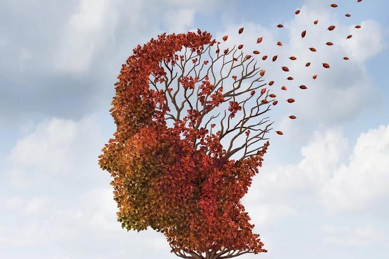 regenerar-celulas-cerebrales-0