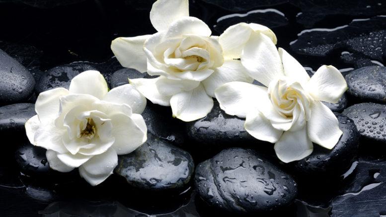 9-Beneficios-del-Aceite-Esencial-de-Gardenia